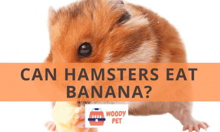 Can Hamsters Eat Banana?