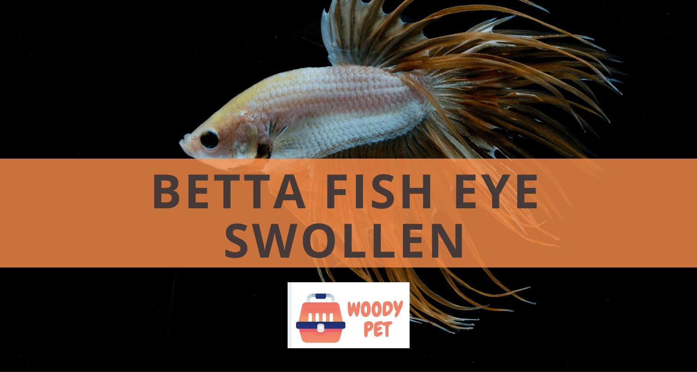Betta Fish Eye Swollen