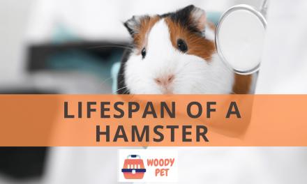 Lifespan of a Hamster.