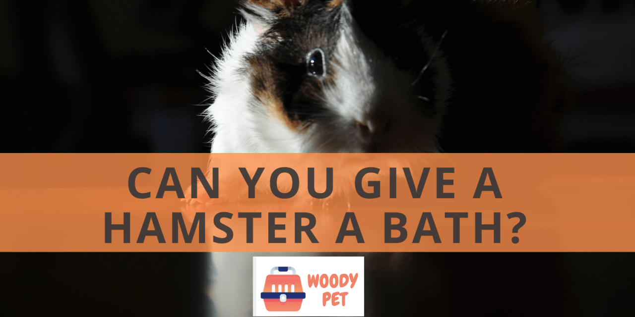 Can you give a Hamster a Bath?