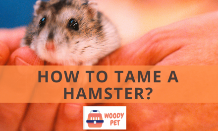 How to Tame a Hamster?