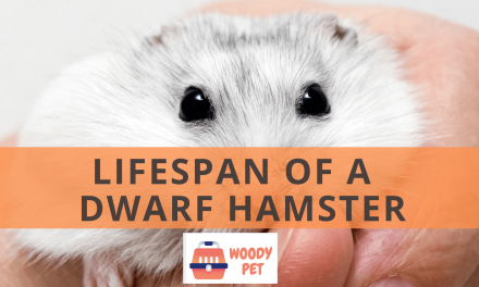 Lifespan of Dwarf Hamster.