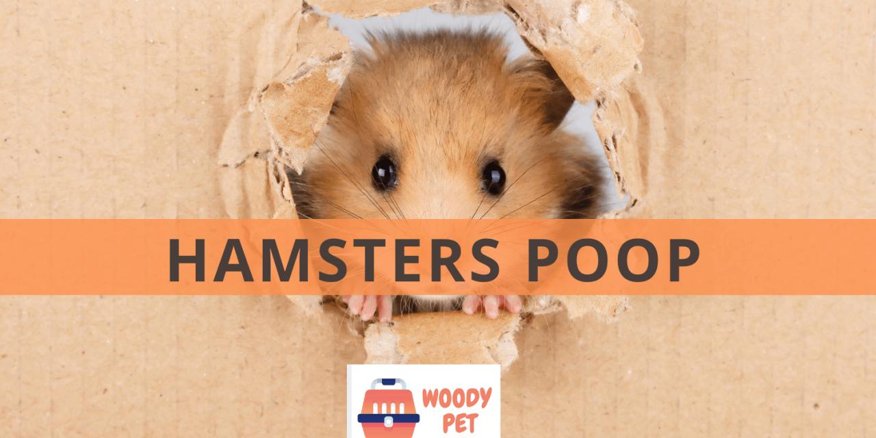 Hamster Poop