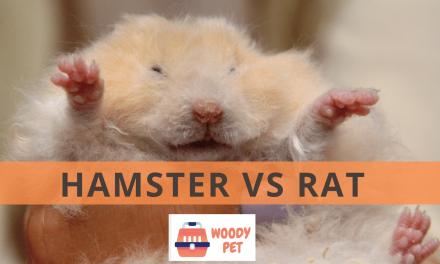Hamster vs Rat
