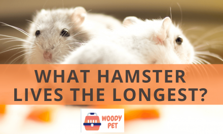 What Hamster Lives the Longest?