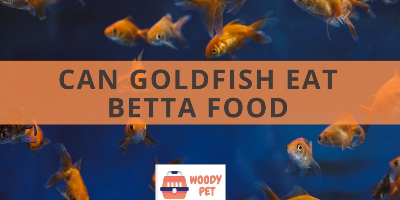 Can goldfish eat betta food? They would probably eat it anyways.