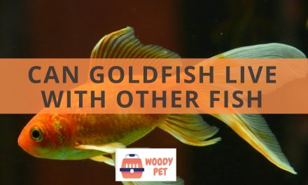 Can goldfish live with other fish? Sharing is caring, right?