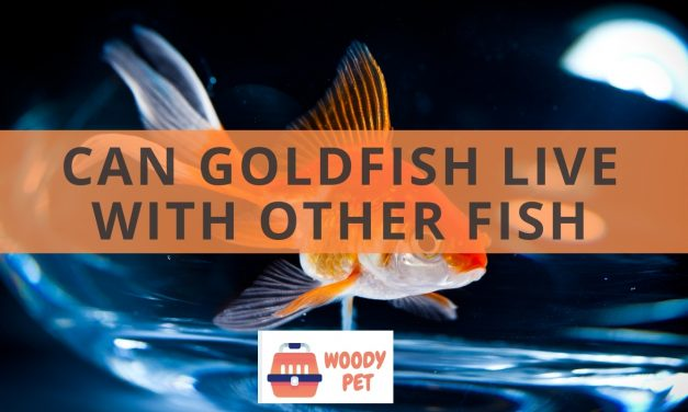 Can goldfish see in the dark? They probably can't