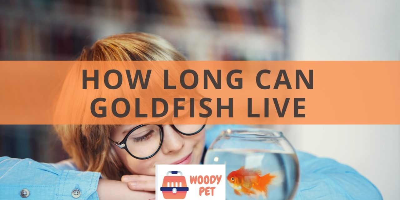 How long can goldfish live? It can be more than you dog!