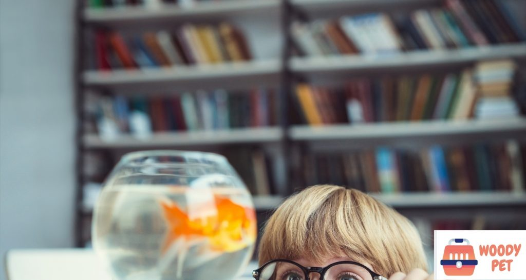 How long can goldfish live (2)
