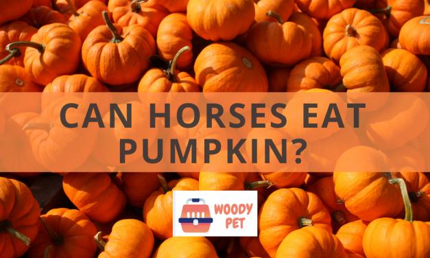 Can Horses Eat Pumpkin?