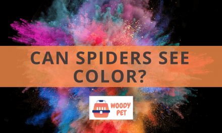 Can Spiders See Color?