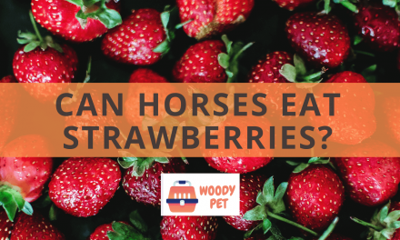 Can Horses Eat Strawberries?