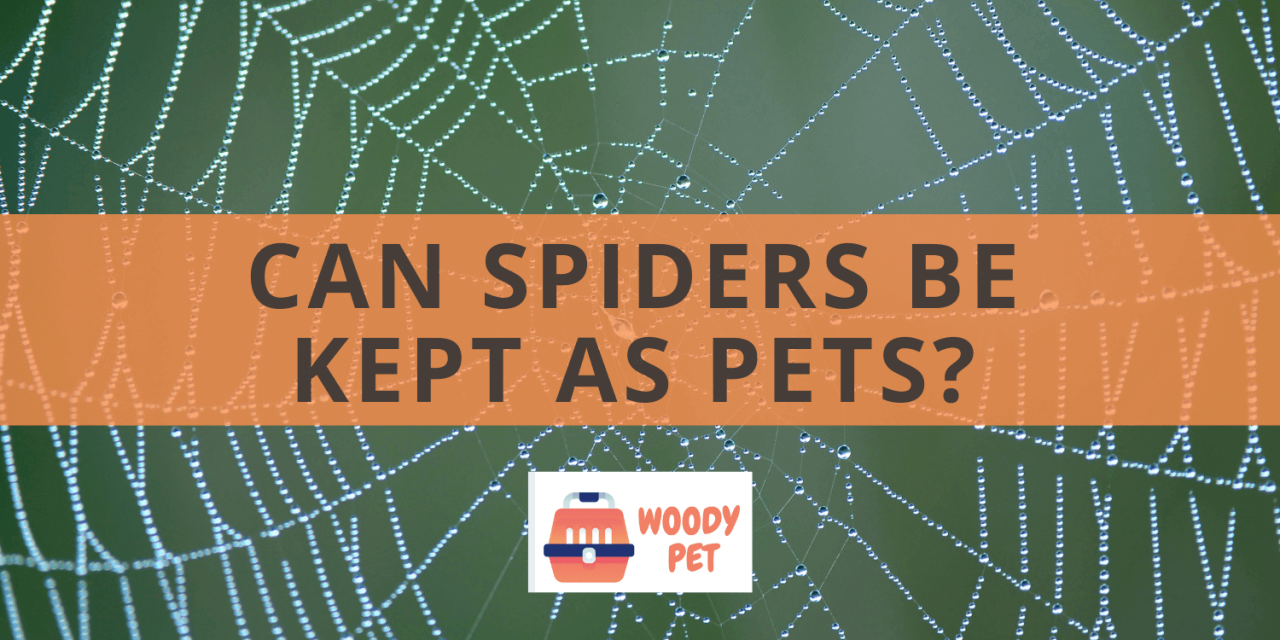 Can Spiders Be Kept As Pets?