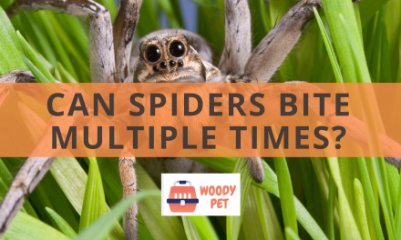 Can Spiders Bite Multiple Times?