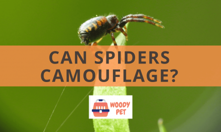 Can Spiders Camouflage?