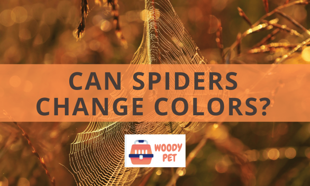 Can Spiders Change Colors?