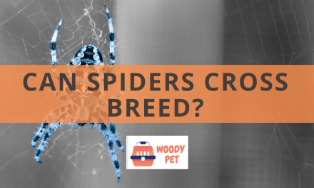 Can Spiders Cross Breed?