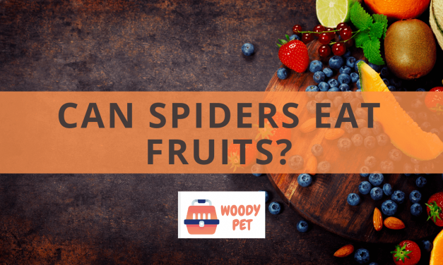 Can Spiders Eat Fruit?