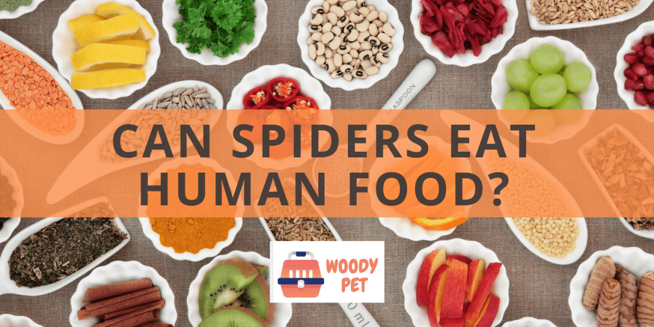 Can Spiders Eat Human Food?