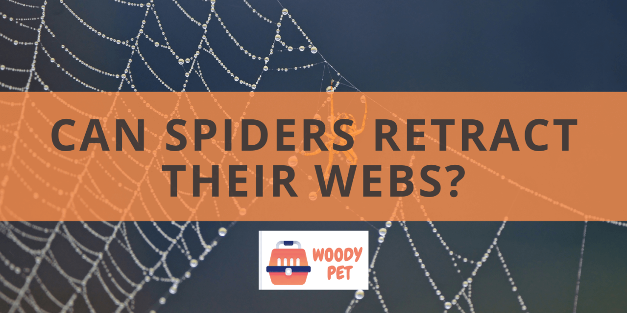 Can Spiders Retract Their Webs?
