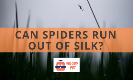 Can Spiders Run Out Of Silk?