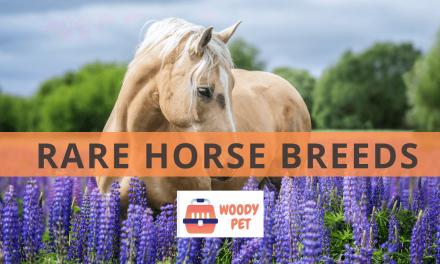 Rare Horse Breeds.