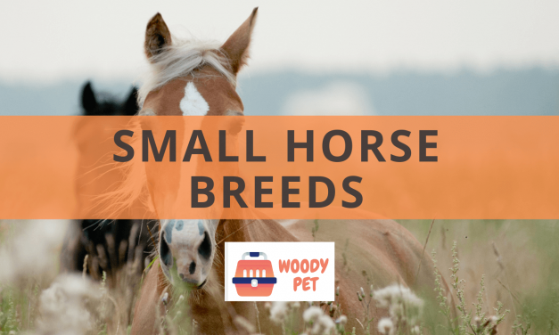 Small Horse Breeds