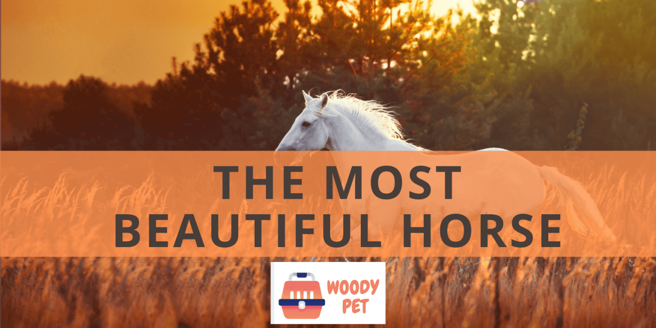 The Most Beautiful Horse