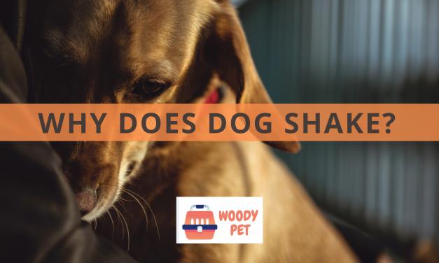Why Does Dog Shake?