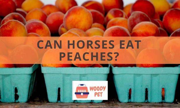 Can Horses Eat Peaches?