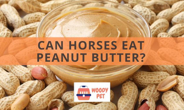 Can Horses Eat Peanut Butter?