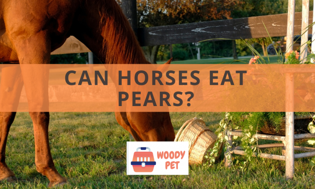 Can Horses Eat Pears?
