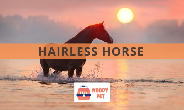 Hairless Horses