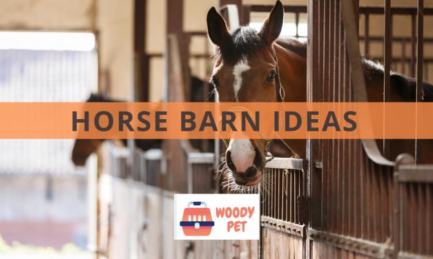 Horse Barns Ideas