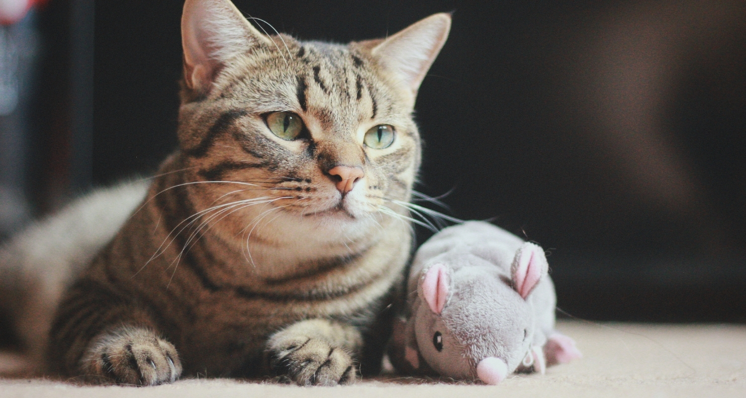 How Can You Tell If Your Cat Has Diabetes