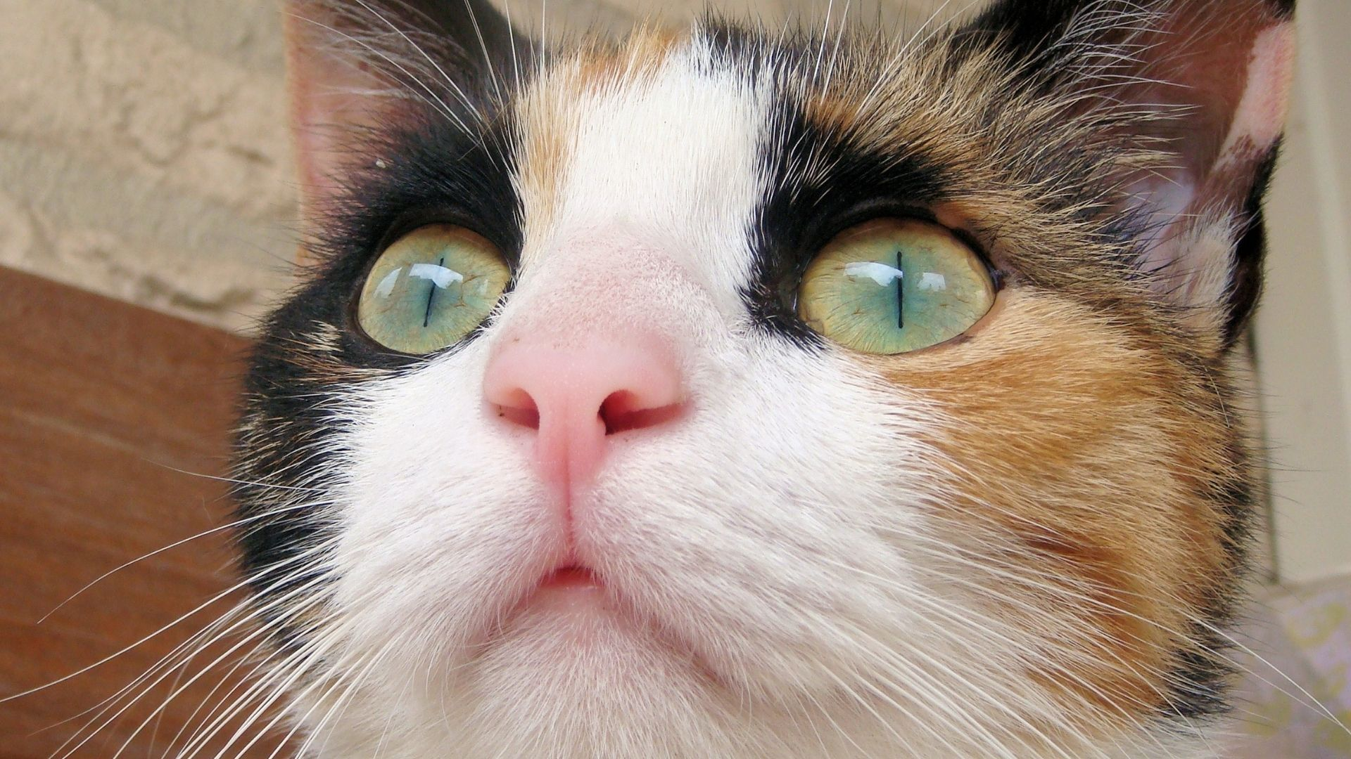 Schrodinger Cat Explained