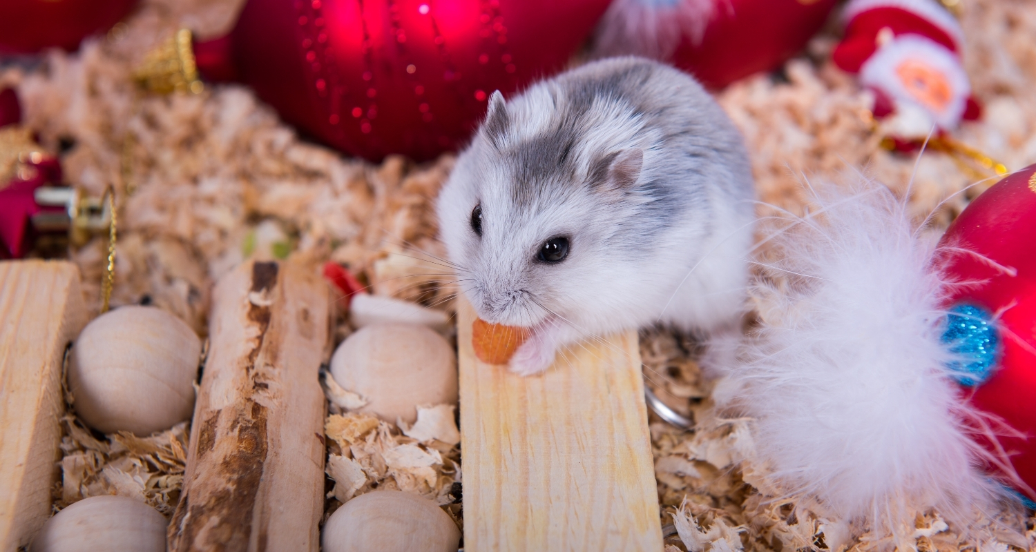 Why Do Hamsters Eat Their Babies