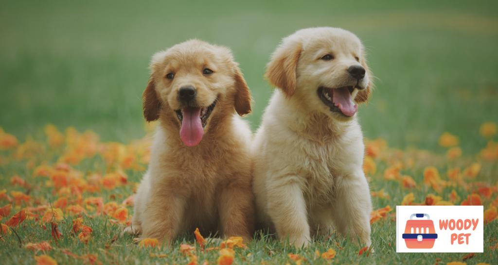 Why Does Dog Pee Kill Grass