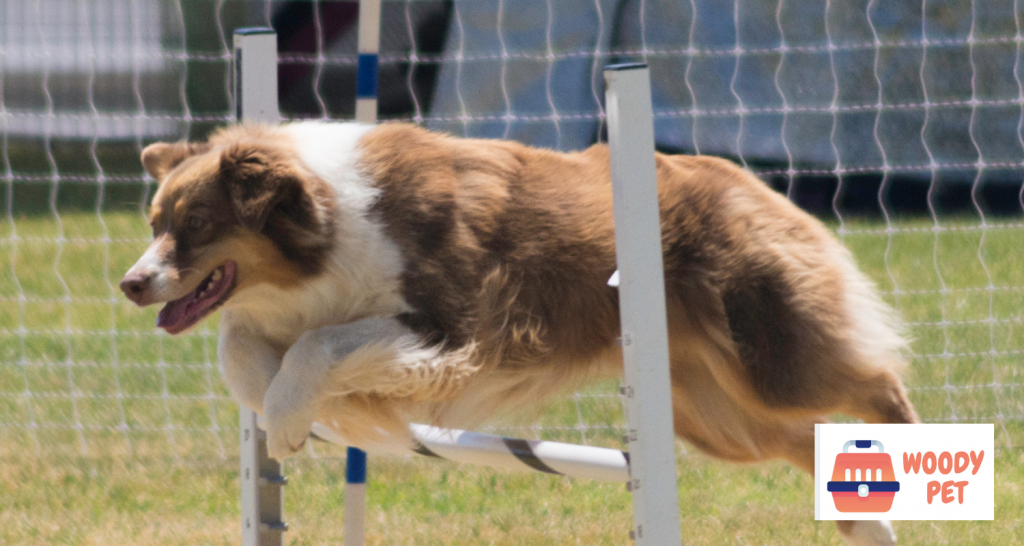 Why Do Dogs Jump