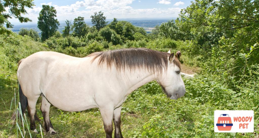 can horses eat sweet potatoes